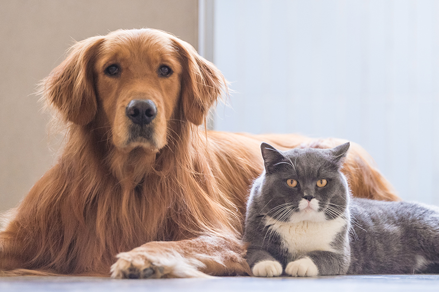 Cuida la piel de tu perro como si fuera la tuya